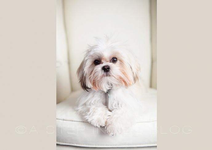 teddy bear puppy Payton